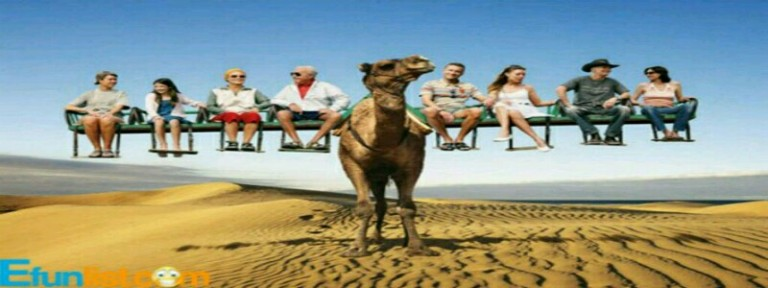 funny-travel-of-desert-640x400-1024x640-800x300